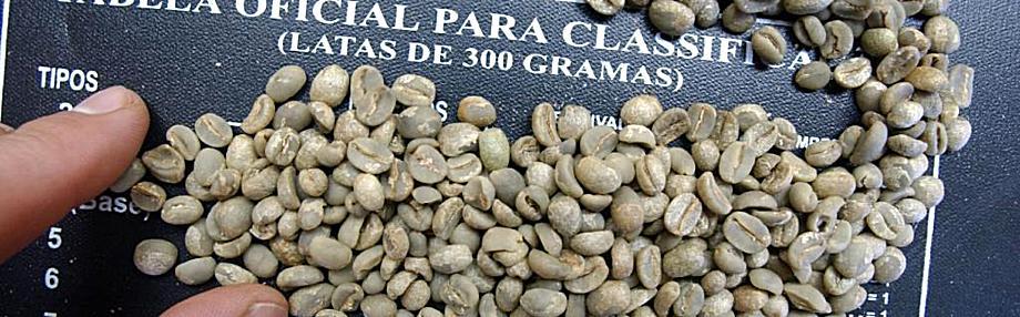 café grain vert le havre formation négoce scae barista belco torréfaction